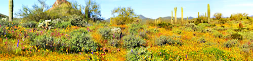 Top 10 Places to See Spring Wildflowers in Arizona | See the Southwest